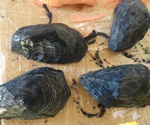 Die Muscheln sehen fast wie echt aus